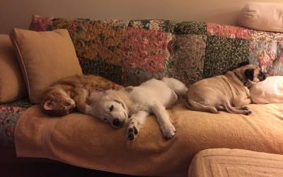 Teddy – Larissa & Maks Puppy – AKC S.T.A.R. Puppy