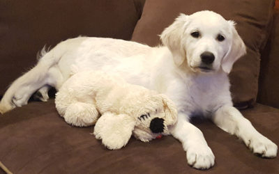 """Sadie"" Laveda and Zhivago Pupppy"